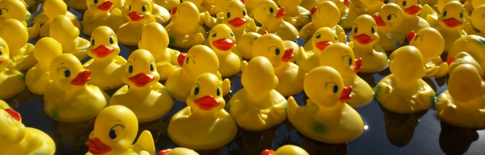 Duck Race – Résultats